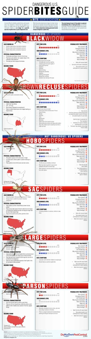 --> Guide to Spider Bites