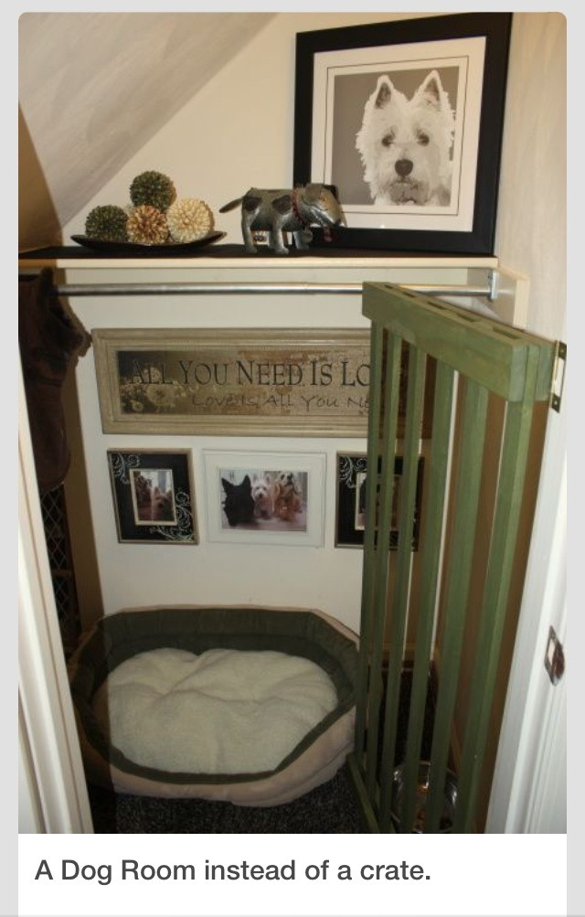 Perfect Small Dog Closets 137 Best Ideas About Best Pet Home Setups On