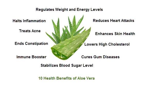 Is It Good To Drink Aloe Vera Juice Everyday