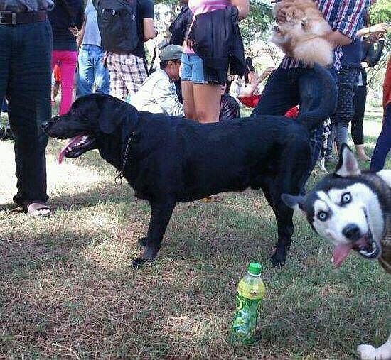 Husky photo bomb.