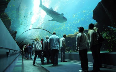 Be sure to go to the Georgia Aquarium! It's one of the biggest in the world.