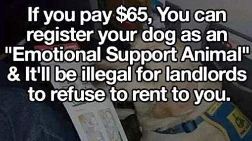 If you pay $65 you can register your animals as and Emotional Support Animal and landlords legally cannot refuse to rent to you.