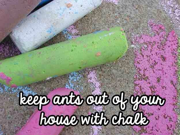 A simple DIY way to get rid of ants: Chalk   Most chalks contain calcium carbonate, which ants don't like.