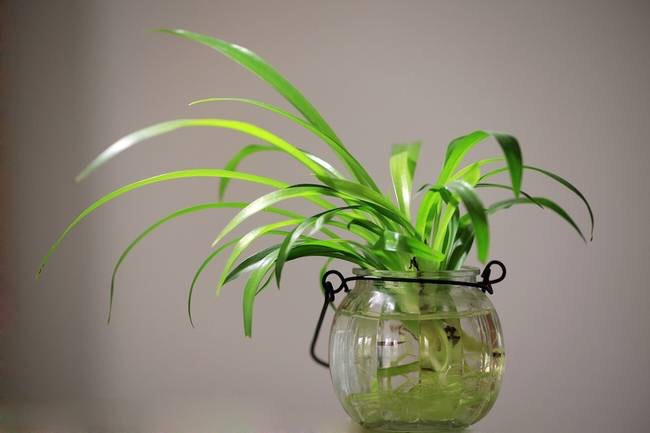 Common Cold Indoor plants increase humidity levels anddecrease dust,reducing cold-related illnesses by more than 30%. Drowsiness Excess carbon dioxide can elevate drowsiness levels. During photosynthesis, plants remove carbon dioxide from the air.