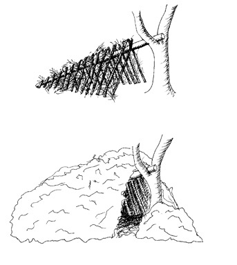 To build a survival shelter follow these steps:  1.Get a ridge pole and secure it in a stump to hold it in place. 2.put some ribbing on the ridge pole to cover it like shown above 3.Next put lattice and debris on top of it( 2 feet thick of leaves, grass,etc. pile debris next to the door when asleep.