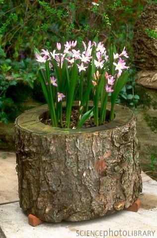 How to reuse a fallen tree