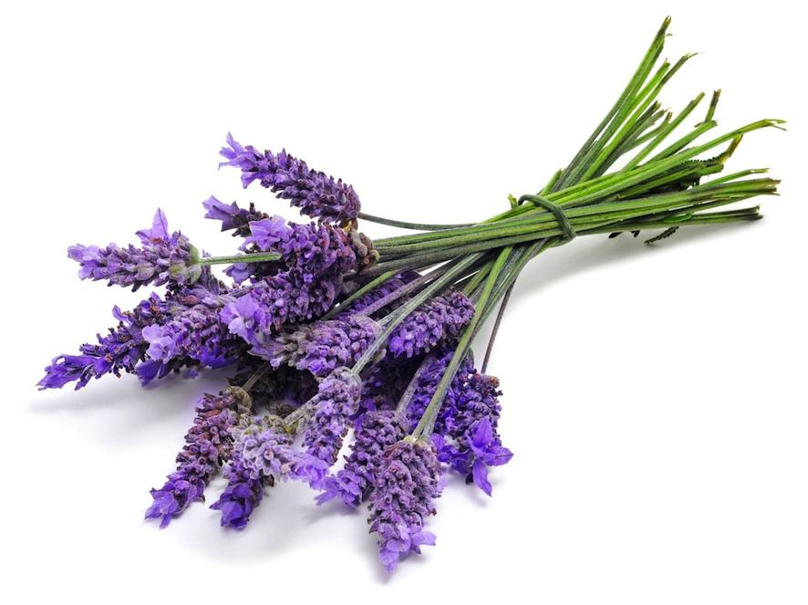 Lavender   Anti-inflammatory, good for healing skin irritation, cuts and scrapes