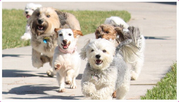 Exercise is needed because they need to run around and play