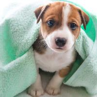 Donate old blankets and sheets to your local animal shelter. They can use them for bedding.