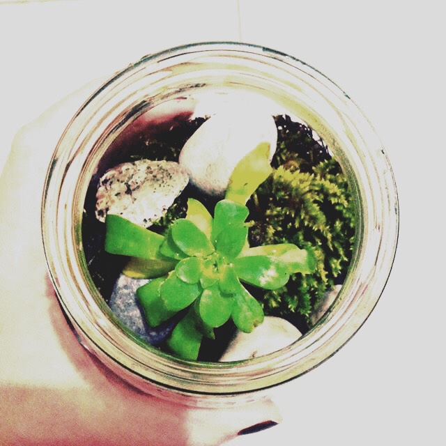 A plant sulcent🌵🌳🌲- The materials you'll need for this summer DIY is small white rocks, different types of plants, and a type of jar you'd like to use. This is a really good Summer room decor to use🖼🖼🖼