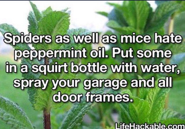 Plus it doesn't release stinky fumes like chemical sprays! 👍👍👍