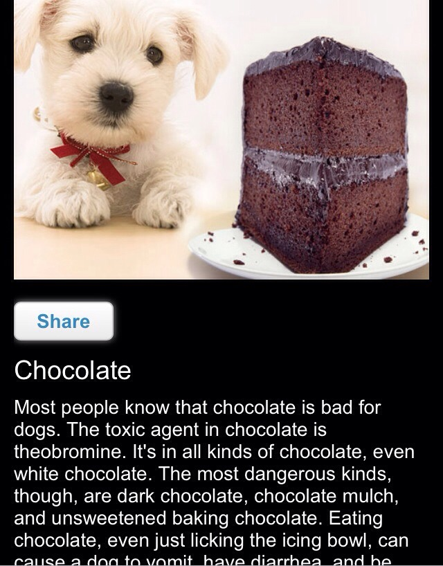 chocolate is bad for dogs. The toxic agent in chocolate is theobromine. It's in all kinds of chocolate, even white chocolate. The most dangerous kinds, though, are dark chocolate