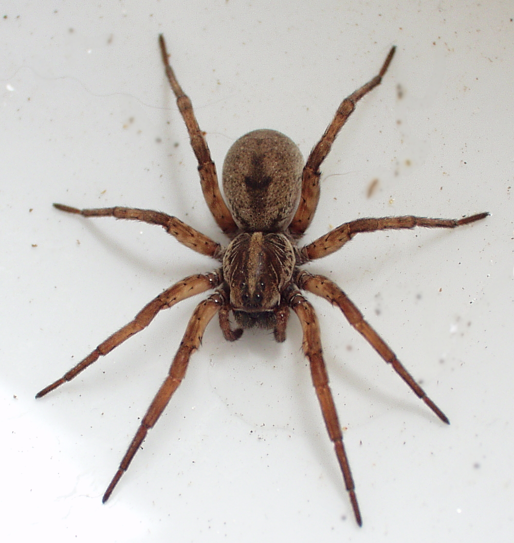 do you get spiders in your,house?