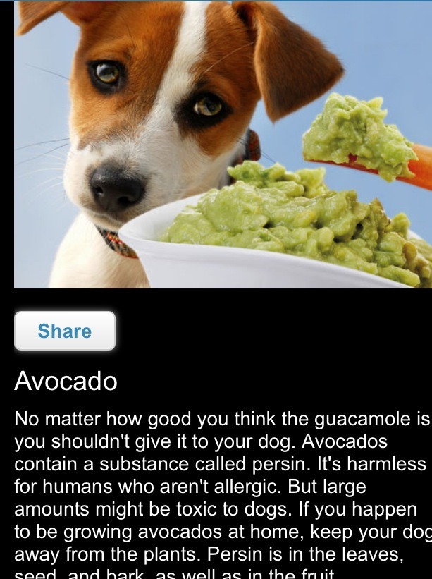 Avocado in larger amounts may be toxic for your dog