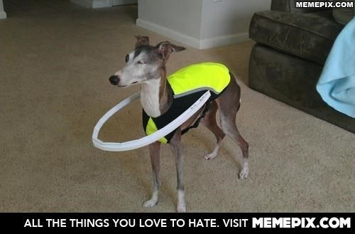 40. This owner invented a loop suit to keep her blind pincher from running into things around the house!