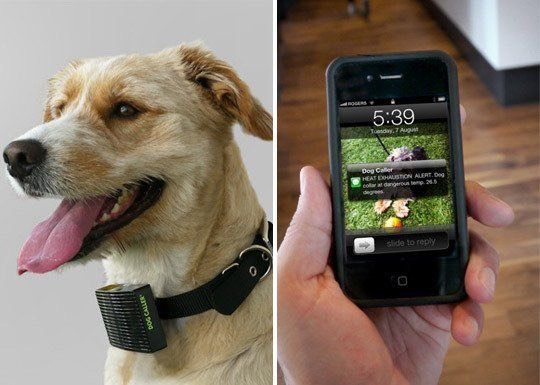 26.The Dog Caller Made of a SIM card, a thermistor, a few LEDs and a coded chip, the Dog Caller operates like a cellphone without a keypad or screen. When the collar hits 26.5 degrees, the device will alert your phone via text message. $20.00