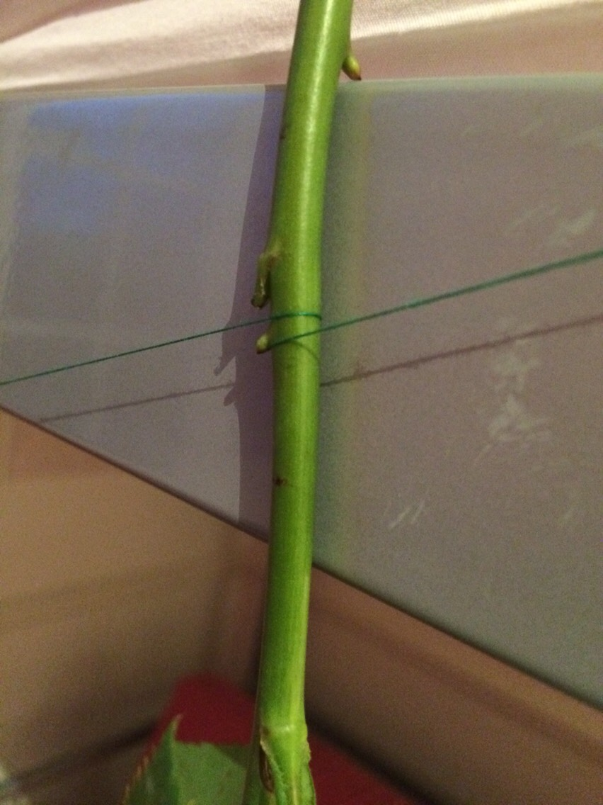 Similarly, if tying the string around the stems is too fiddly, tie the string tight and then wrap it around the stems.