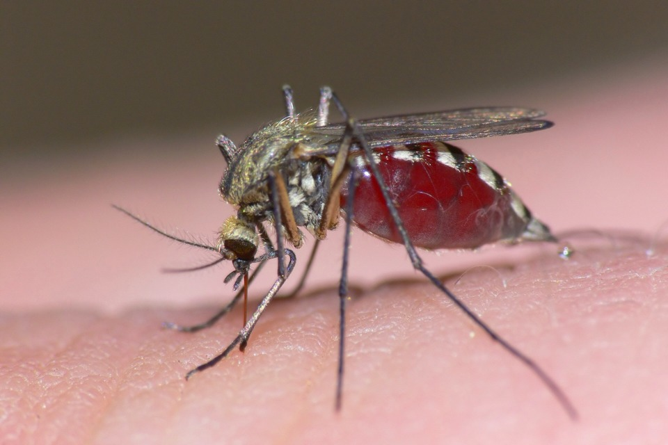 Simply put Purell hand sanitizer on your mosquito bite and wait! Your itchy bites will vanish!