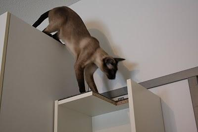 adding some height, can keep in sight all the home, is a basic instinct in cats