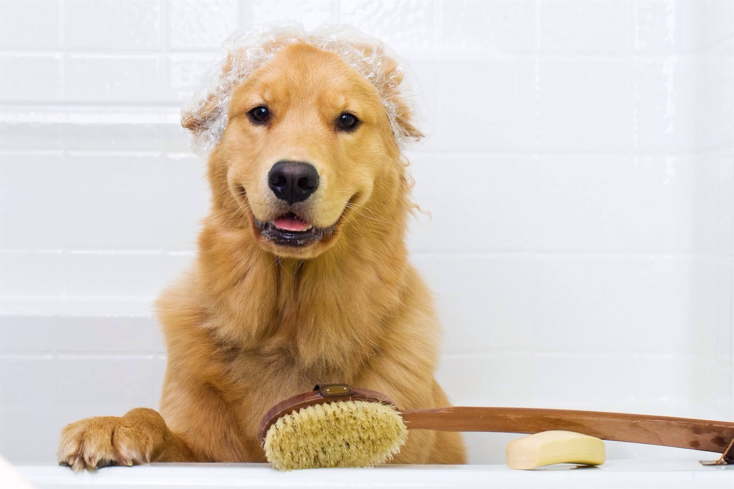 Use Dawn as a flea shampoo! It's gentle on a dog's skin but terminates fleas and flea eggs! Take that, fleas!