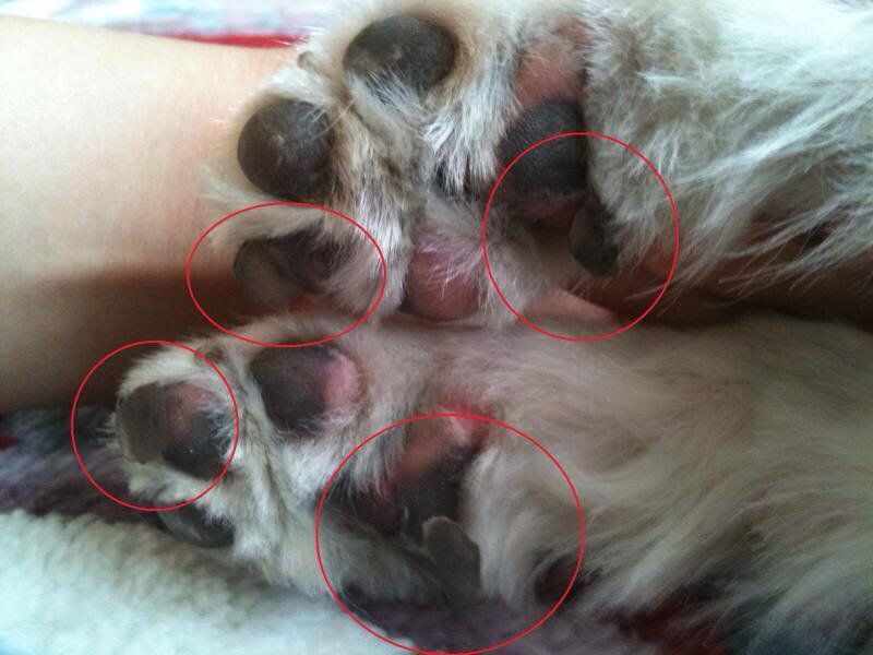How To Wrap Your Dog S Paw With Gauze