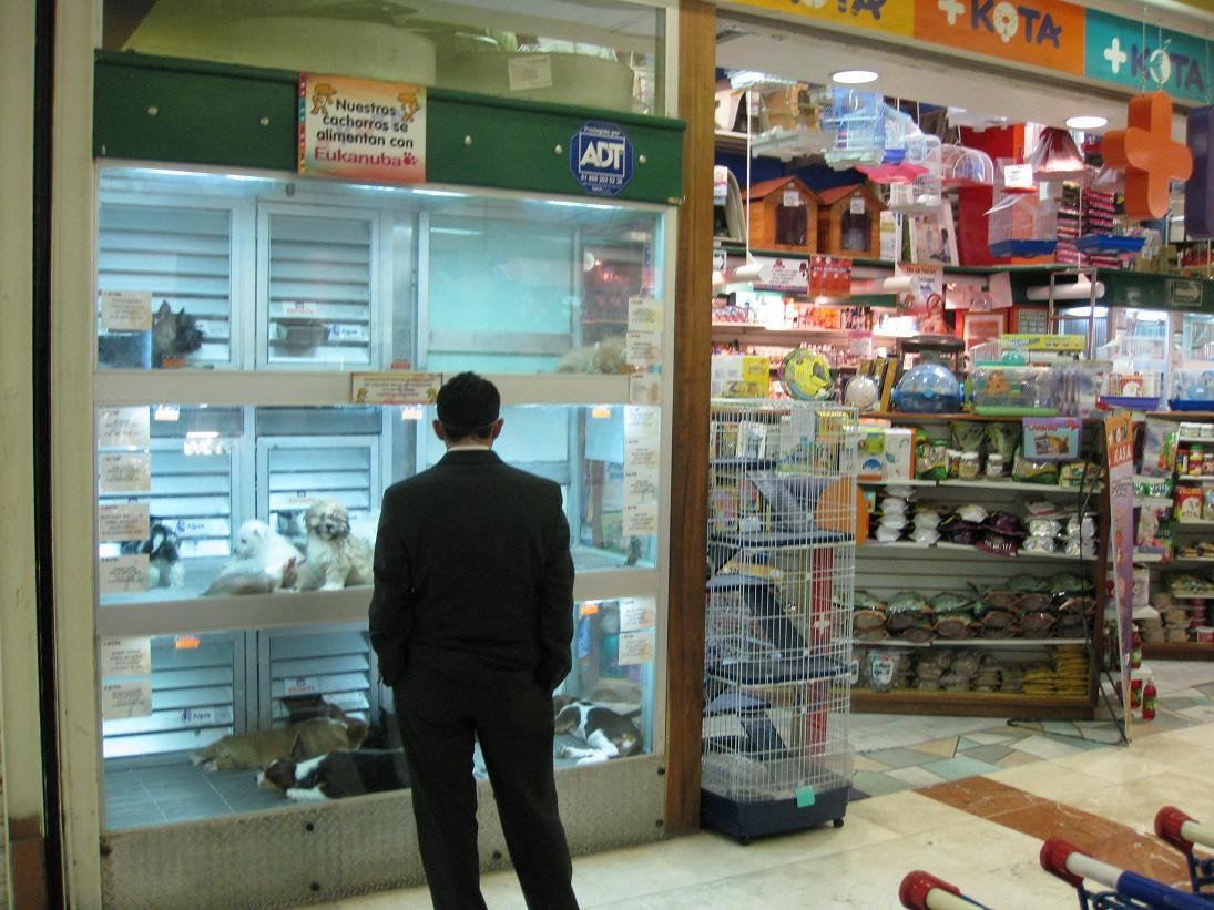 Pet store: go and look at animals in the pet store.