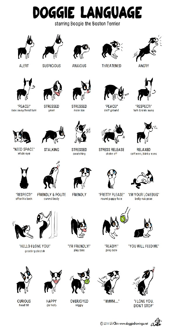 understand what your dog is trying to tell you !! :) please like and follow me ♥♡ thanks !!