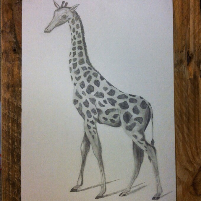 Go to allthingsashley on Etsy to find this beautiful giraffe along with other great sketches and items!!