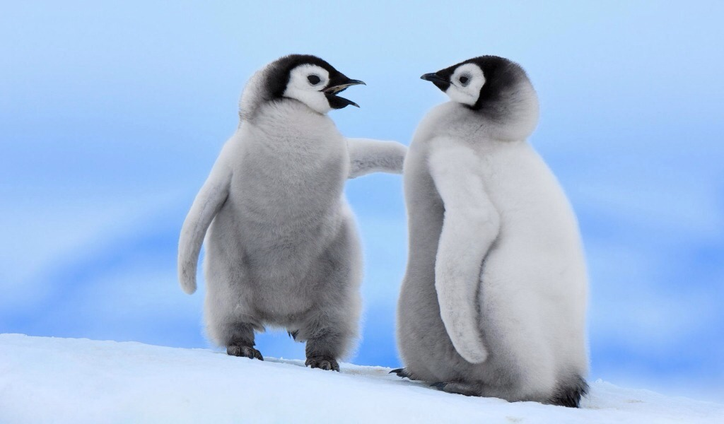 Penguins cannot walk backwards their tops are too heavy