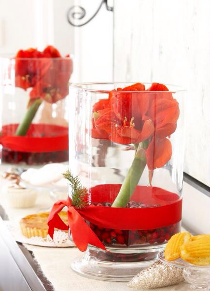 Amaryllis beauty  A tall, clear cylindrical vase supports amaryllis blooms in just a few inches of water. Put cranberries in the bottom and wrap a bright red ribbon at the waterline. A sprig of greenery continues the holiday theme.