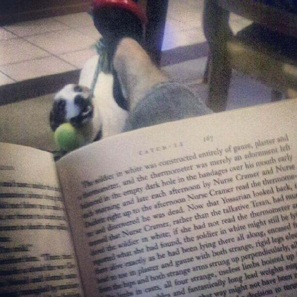 5. Got a lot of studying to do? Here's how to read and play with your dog at the same time: Put a rope toy around your foot.