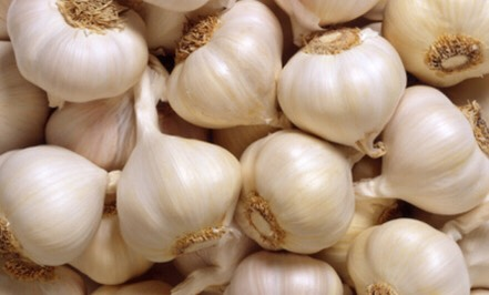 Tooth aches/inflamed gums {cut thin piece of raw garlic/place on inflamed area may sting} Clearing sinuses   Try to incorporate garlic into your diet. Also it that I can prove this, but being an avid garlic eater I do not get bitten by ticks or fleas bugs etc. Makes bad tasting blood.
