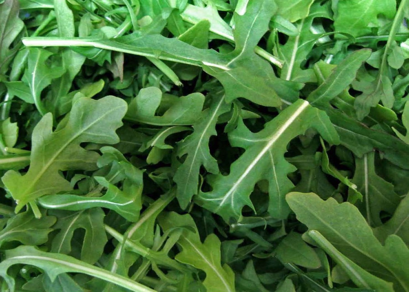 Arugula:Arugula has been heralded as an arousal aid since the first century. Today, research reveals that the trace minerals and antioxidants packed into dark, leafy greens are essential for our sexual health because they help block absorption of some of the environmental contaminants