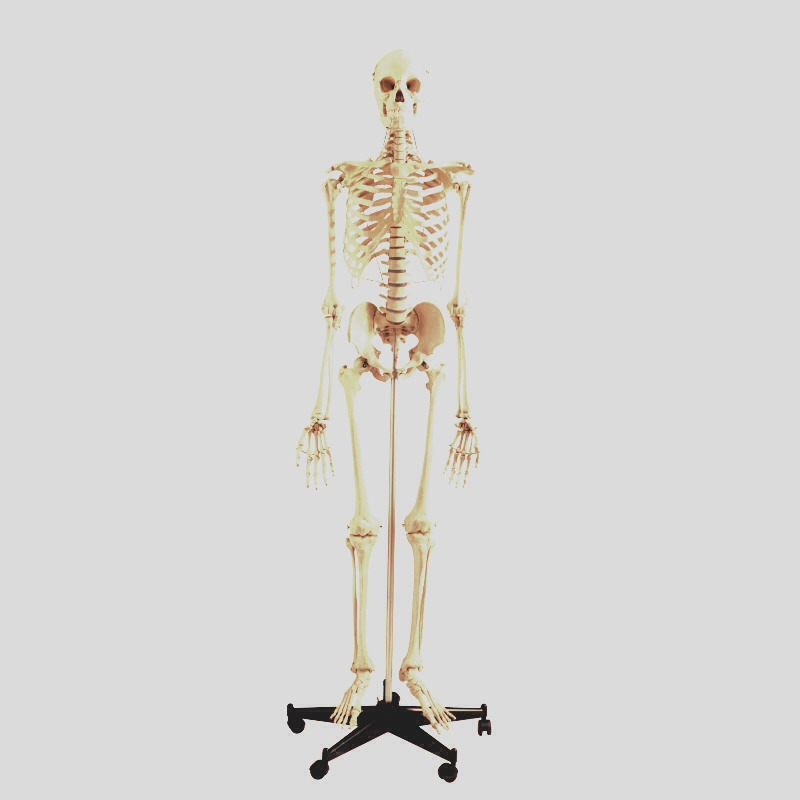 Why didn't the skeleton cross the road?  Because he had no body to cross the road with!