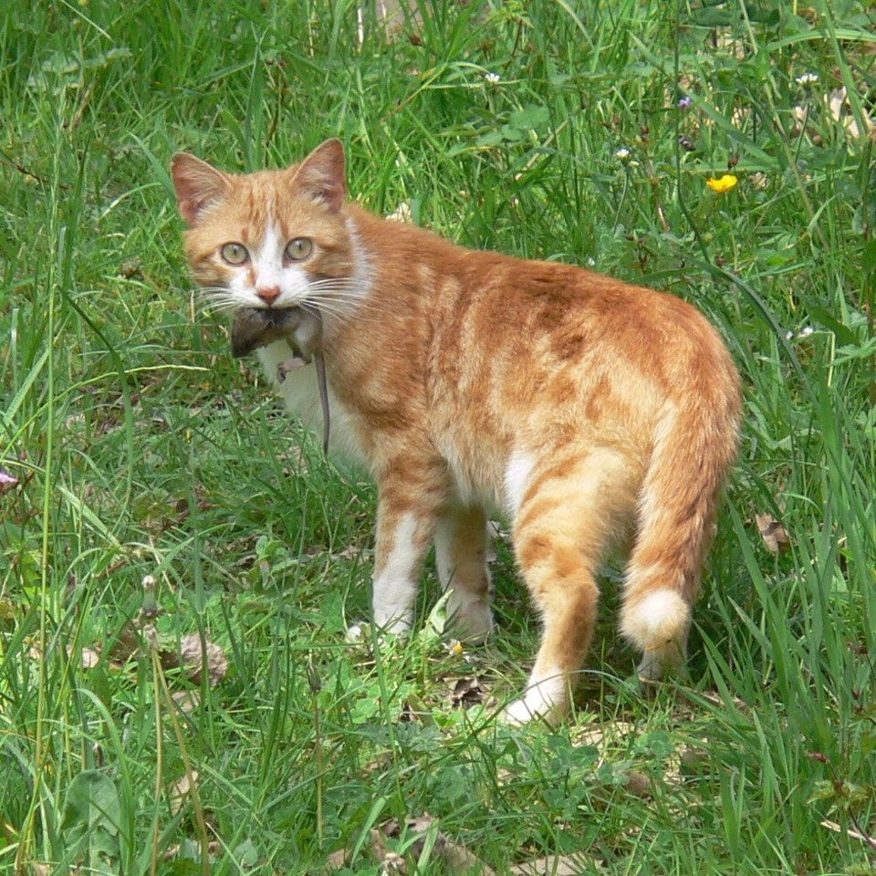 """6. Your cat brings you """"presents"""": Cat moms teach kittens how to hunt through demonstration. When cats leave dead animals at your door, he or she is simply treating you like a member of family -- a part of the family that can't hunt very well."""