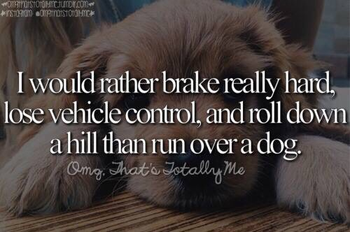 I rather loose control of my car, crash into another car, roll onto the train tracks and get hit by a ran than to run over a dog  And don't tell me you wouldn't do the same