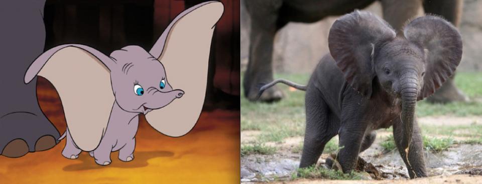 """""""Dumbo"""" - Baby Dumbo"""