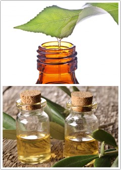 TEA TREE OIL   Multiple studies have confirmed that tea tree oil has strong anti-fungal properties + high skin penetration abilities, which makes it one of the best cures for dandruff.