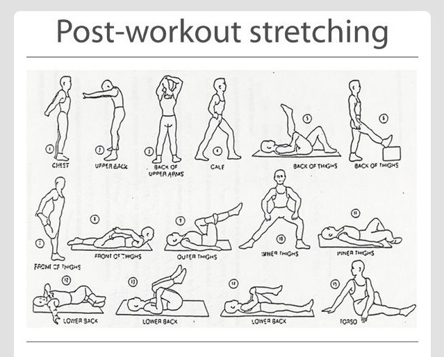 Stretches are just as essential as working out is for your muscles! They help speed up recovery as well as muscle growth. These are a few ideas for the basic muscle groups, to be performed after every workout session