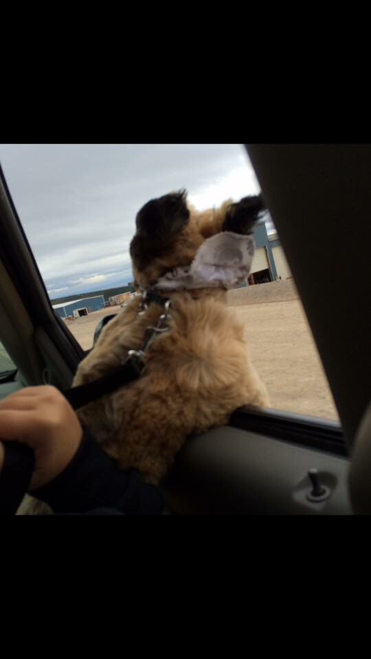 4; They enjoy the outdoors and the wind in there hair so let them stick there head out the car window, i know my shih tzu loves the car, as soon as you ask her 'wanna go for a ride?' She flips out and gets super exited☺️