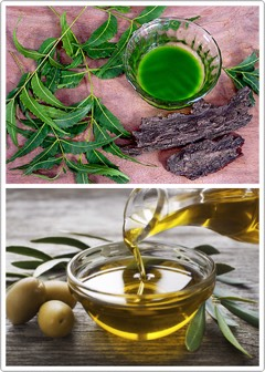 HOWTO Crush a few neem leaves into powder+mix it with 4 tbspof olive oil. Apply this paste to your scalp in the evening, beforebed, +shampoohair in theAM. Your scalp will probably itch a little when you apply the paste, but it is completelynormal +will soon pass.