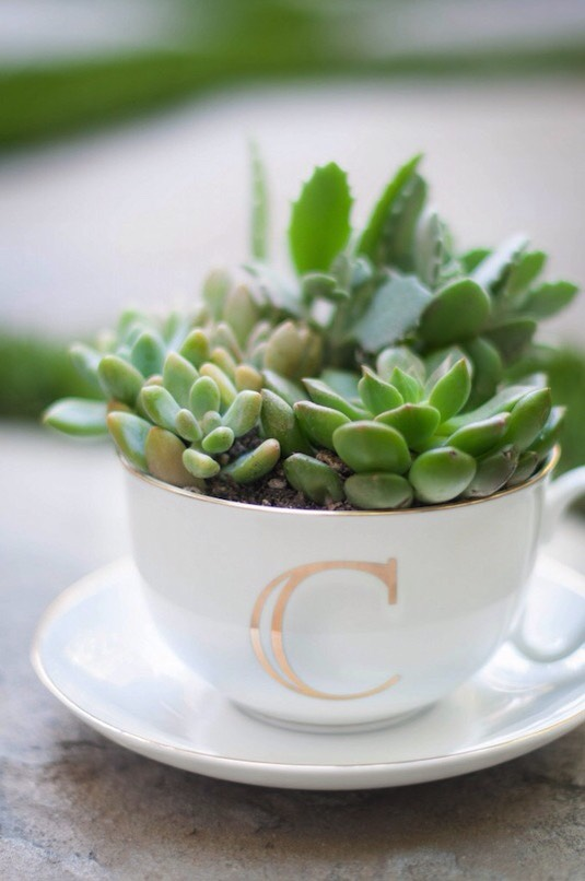 32. Succulents In A Tea Cup Succulents are my favorite plants, and they are really easy to take care of. Place a few in a tea cup for a charming gift idea! You could even easily customize the cup with oil-based Sharpies to make it more personalized.