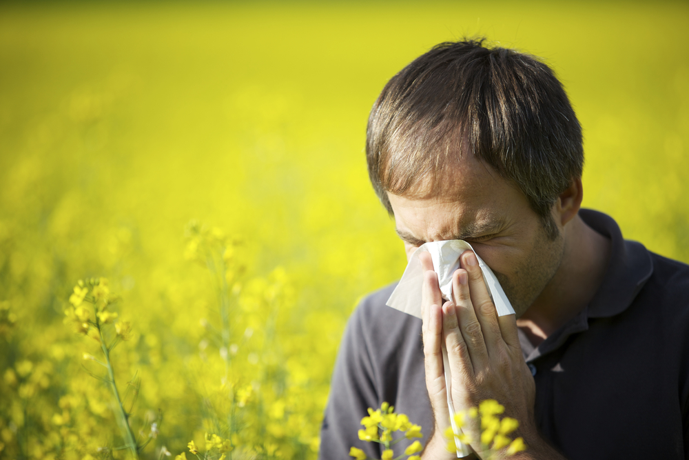 OVER THE YEARS MY HAYFEVER GOT REALLY BAD NOTHING SEEMED TO WORK, THE HEADACHES AND BLOCKED NOSE WERE THE WORST SO I WAS SENT TO HOSPITAL. I WAS GIVEN FLIXONASE NASAL DROPS NEVER HAD HAYFEVER SINCE HAVE TO USE THEM TWICE A DAYBUT WOW!