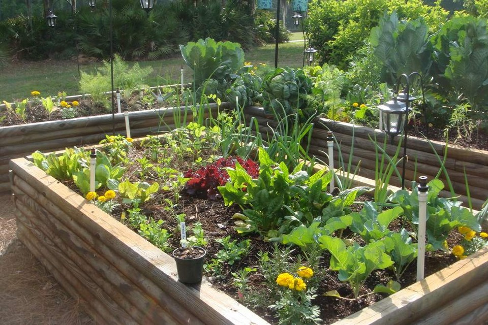 Vegetable Garden Ideas For Spring musely