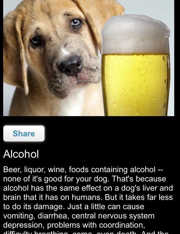 Alcohol has the same effect on a dog's liver and brain that it has on humans. But it takes far less to do its damage. Just a little can cause vomiting, diarrhea, central nervous system