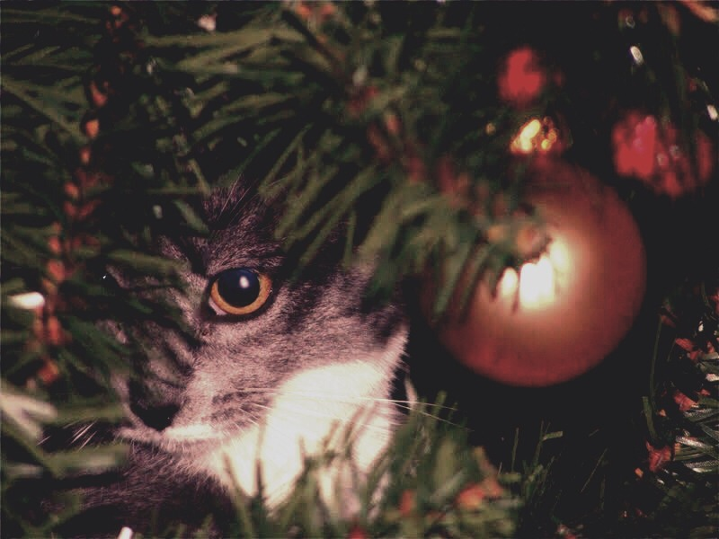 How To Keep Your Cat Out Of Your Christmas Tree by Heather ...