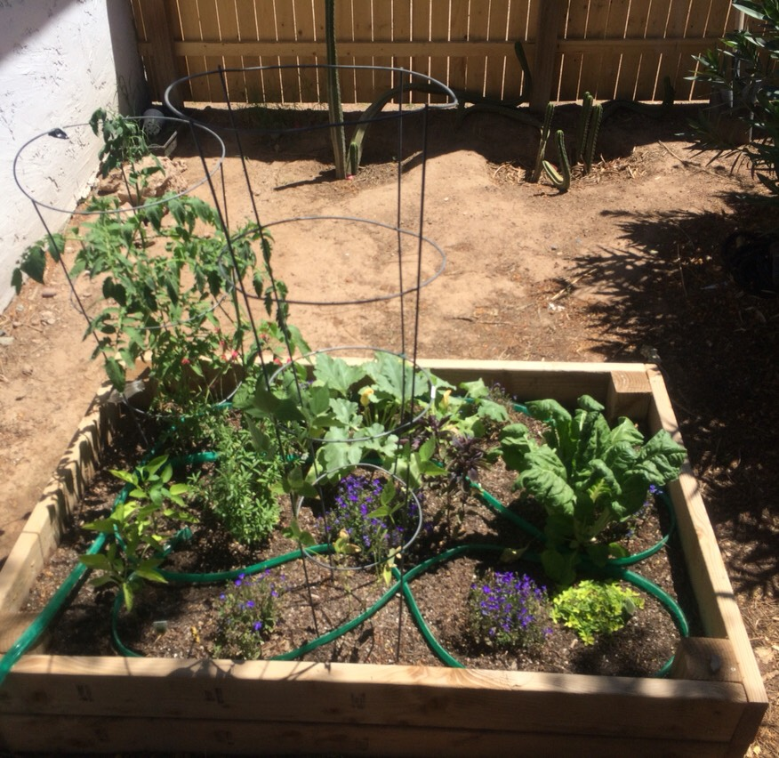 What my healthy garden looks like today