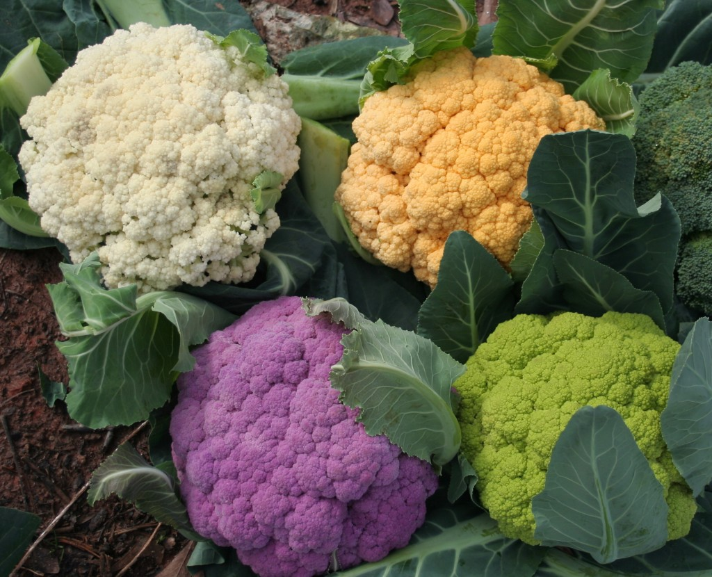 cauliflower is a good source of vitamin c for boosting your immune system and warding off stress. Snack on cauliflower florets along with cucumber carrot sticks before dinner.