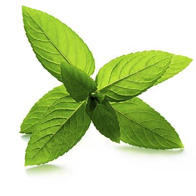 Peppermint to feel more alert Smelling peppermint essential oil made drivers perkier in one study. In another, basketball players who sniffed peppermint oil had better energy and performance.