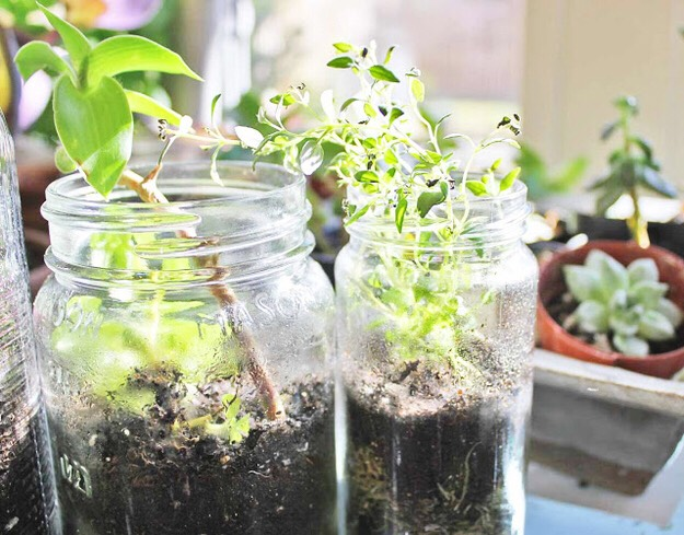 4. Terrariums  Scissors and Steam / Via scissorsandsteam.blogspot.com Bring a little bit of green into your space with cute, easy mason jar terrariums.